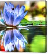 Water Lily And Bee Canvas Print