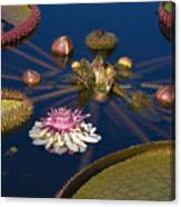 Water Lily And Platters Canvas Print