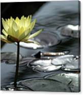 Water Lily And Silver Leaves Canvas Print