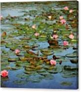 Water Lily Ballet Canvas Print