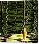 Water Lily Budd Canvas Print