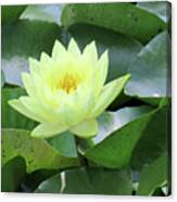 Water Lily - Burnin' Love 14 Canvas Print