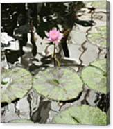 Water Lily Canvas Canvas Print