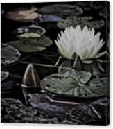 Water Lily Iv Canvas Print