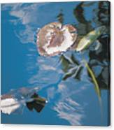 Water Lily Leaves And Reflection Of Clouds In Unknown Lake Canvas Print