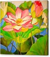 Water Lily Lotus Canvas Print