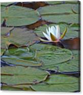 Water Lily Scene Canvas Print