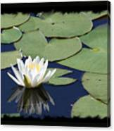 Water Lily With Black Border Canvas Print