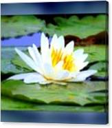 Water Lily With Blue Border - Digital Painting Canvas Print