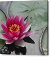 Water Lily With Bubbles Canvas Print