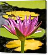 Water Lily With Dragonfly Canvas Print