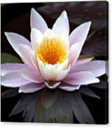 Water Lily With Reflection  Canvas Print