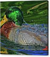 Water Off A Ducks Back Canvas Print