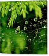 Water Orbs In Cobweb. Canvas Print