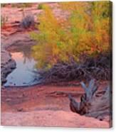 Magic Puddle At Canyon Lands Canvas Print