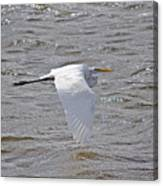 Water Skimming Canvas Print