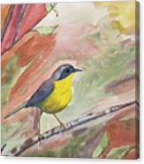 Watercolor - Common Yellowthroat Canvas Print