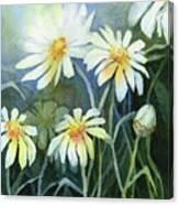Daisies Flowers  Canvas Print