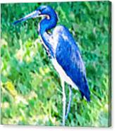 Watercolor Heron In Grass Canvas Print