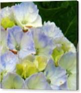 Watercolor Hydrangea Canvas Print