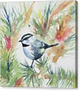 Watercolor - Mountain Chickadee And Pine Canvas Print
