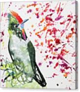 Watercolor - Rainbow Bearded Thornbill Canvas Print