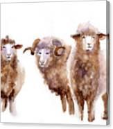 Watercolor Sheep Canvas Print
