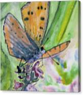 Watercolor - Small Butterfly On A Flower Canvas Print