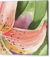 Watercolor Tiger Lily Dance Of Petals Close Up  Canvas Print
