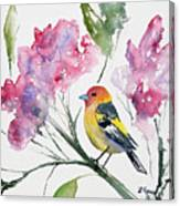 Watercolor - Western Tanager In A Flowering Tree Canvas Print