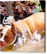 Waterdog Canvas Print