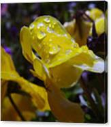 Waterdrops On A Pansy Canvas Print