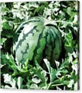 Waterelons In A Vegetable Garden Canvas Print