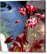Waterfall And Columbine II - Pride Of Colorado Canvas Print