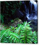 Waterfall El Yunque National Forest Canvas Print