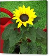 Watering With Sunflower Canvas Print