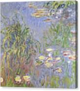 Waterlilies, Cluster Of Grass Canvas Print
