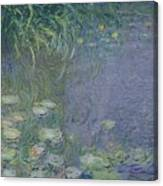 Waterlilies Morning Canvas Print