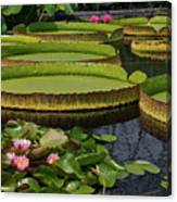 Waterlilies North And South Canvas Print