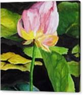 Waterlily Watercolor Canvas Print