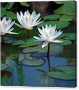 Waterlilys Canvas Print
