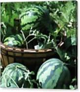 Watermelon In A Vegetable Garden Canvas Print