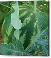 Watermelon Season  Canvas Print