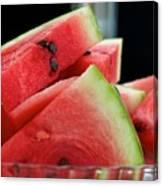 Watermelon Time Canvas Print