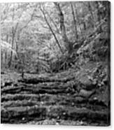 Waterscape In Bw Canvas Print