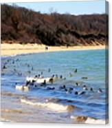 Waves Of Ducks Canvas Print