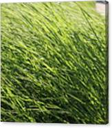 Waving Grass Canvas Print