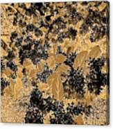 Waxleaf Privet Blooms On A Sunny Day In Black And White - Color Invert With Golden Tones Canvas Print