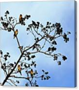 Waxwing Museum Canvas Print