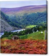 Way Home. Wicklow. Ireland Canvas Print